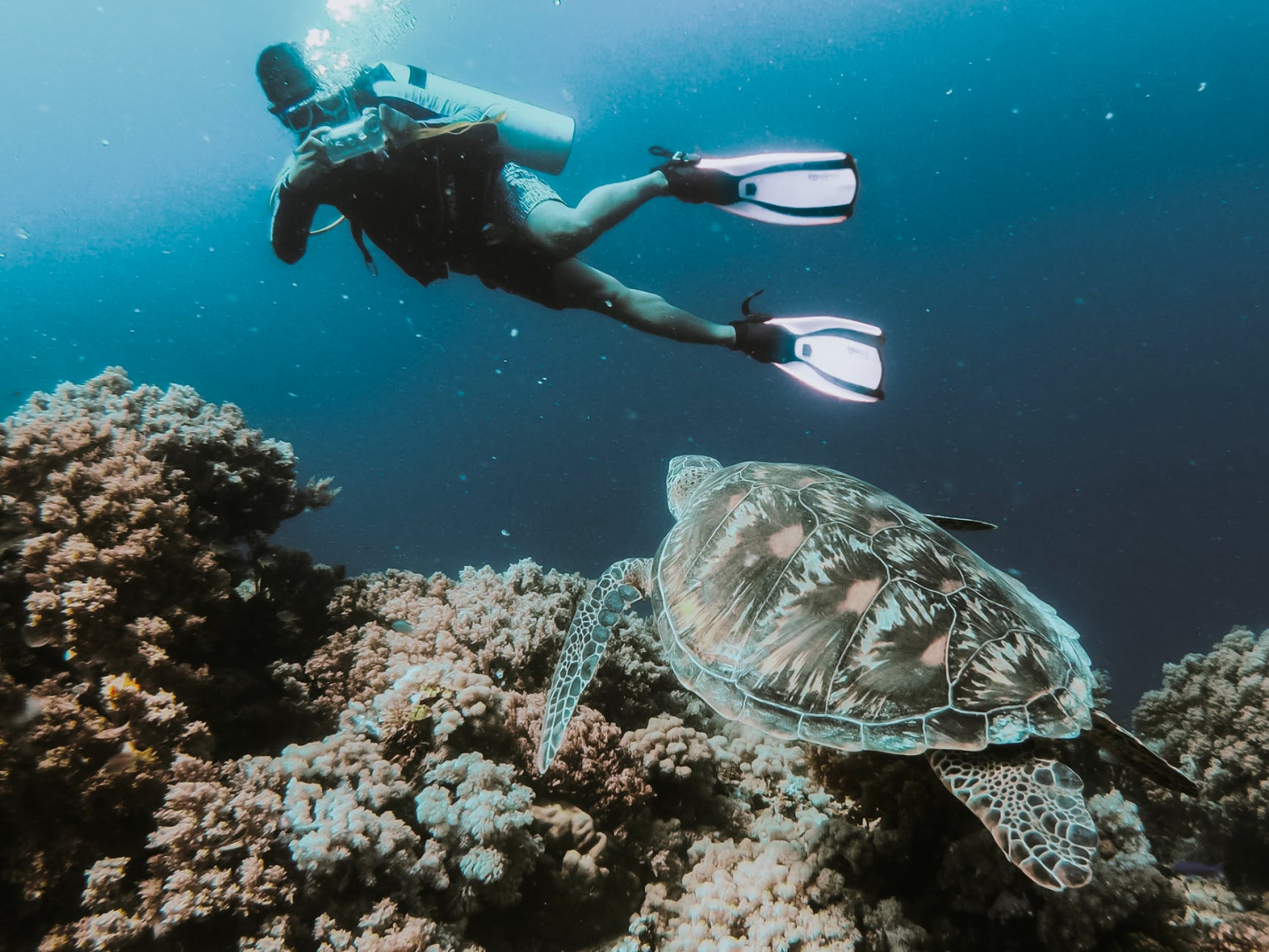 scuba diver looking at beautiful turtle under sea